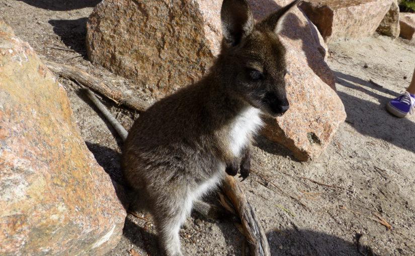 Austrálie a Tasmánie